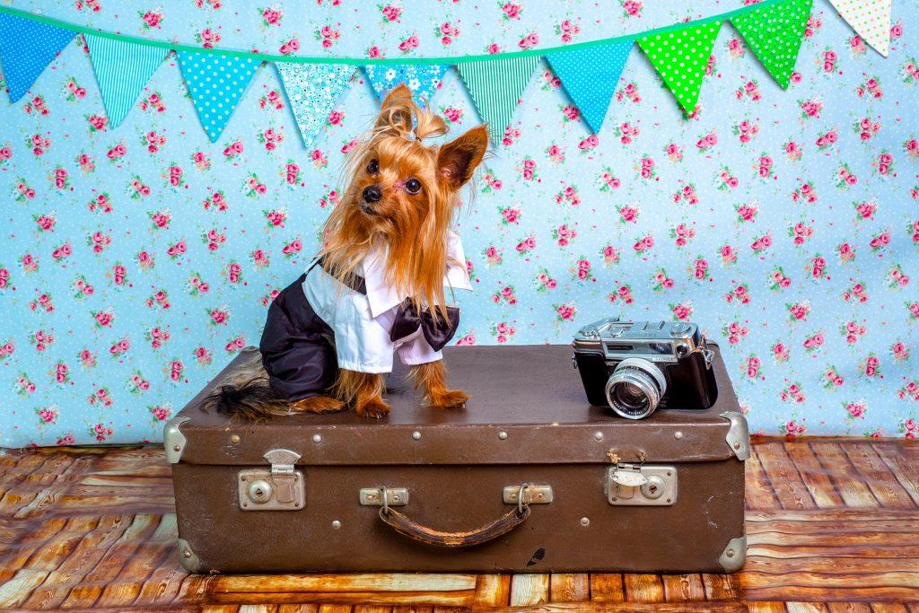 Destinos para viajar con tu mascota