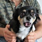 Como afrontar los miedos de tu perro