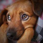 La impronta, una fase clave en la educación de los perros