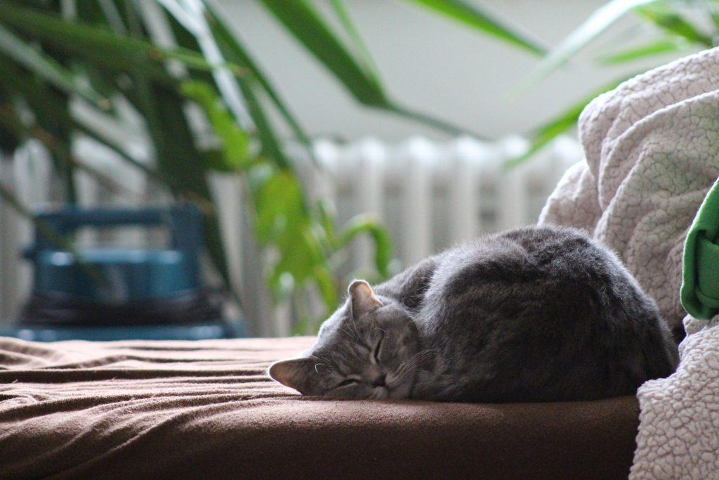 Como tener un gato feliz en casa