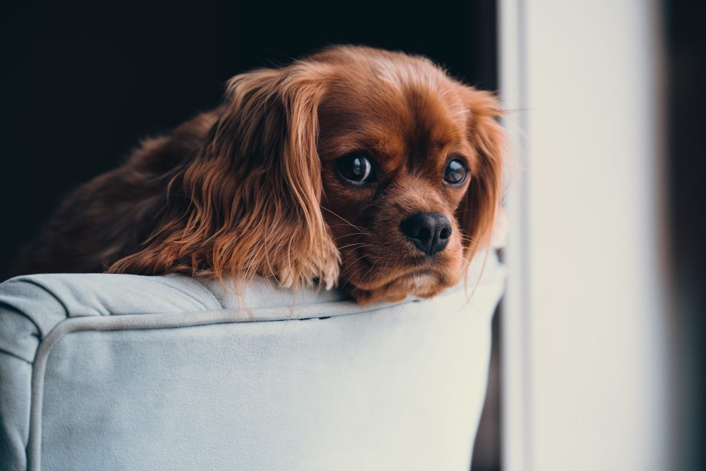 Vuelta a la rutina y…¡El perro solo en casa!